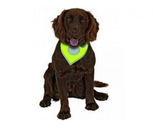 Bandanka Safety Dog niebieska 28-40cm